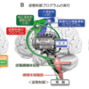 大脳基底核と運動学習、ジストニアについて