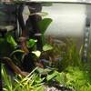 熱帯魚水槽 苔の巻き