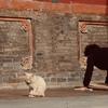 チベットに向かうその前に、西寧(シーニン)で朝のお寺と、毛糸のパンツと(チベット旅行1)