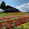 【フラワーランドかみふらの】〜北海道・上富良野町〜9月に見れる花畑は?グランピング施設もあるフラワーパークを紹介!
