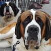 犬種をドイツ語で言ってみよう+ついでにドイツ語も学ぼう