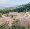 【受験のお守り】桜の名所 善峯寺×ヒロアカ