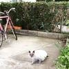 (石破)紫蘭ちゃん家猫になりたくて絶賛営業活動中!...ですが(´Д`)