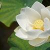 【61-2】『睡蓮の長いまどろみ』宮 本 輝 著 《下巻》