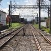 短命の「旧西鷺宮駅跡」と高田馬場の「落合秘境」