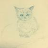 昨日描いたネコと本日発売『九十九怪談』