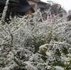 杉の花粉~ヒノキの花粉へ