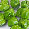 信州の伝統野菜で、ぼたんこしょう味噌を作る:飯山市百姓塾8月講座[2]