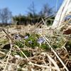 春の草・その1