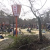 京都 円山公園  花見シーズン到来