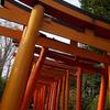 「根津のたいやき」を求めて♪ ぶらり湯島・根津散歩