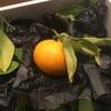 ハニーオレンジ