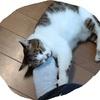 暑い日の伐採・空調ウェア・もやい結び・猫もバテバテ