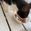 【まう助日誌⑩】猫の好みの味