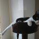 今日の黒猫モモ&白黒猫ナナの動画ー1049