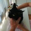 黒猫ココロに皮下点滴(約44回目)&プルさんボコられる