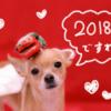 *新年のごあいさつと2018年の抱負♪今年もよろしくお願いします(*´∀`*)