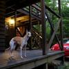長野・安曇野と白馬犬連れの旅