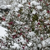 意欲消滅?【うつ病治療中】サインバルタ60mg服用2日目は雪だらけ