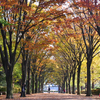 千葉青葉の森公園を散歩