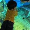 越前松島水族館に行ってきました|4歳男児のお出かけ