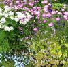 寄せ植えが爽やかなイングリッシュガーデン五月の草花たち