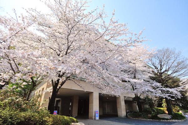 桜の巨木がシンボル。ソメイヨシノ発祥の地に立つマンション