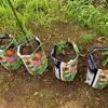 ガーデニング 土の袋で野菜を植えました