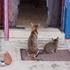 ネコを愛でる会 第一回