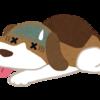 【あのしぐさは病気のサイン!?】実は危険が潜んでいる犬の病気のサインや年齢別の病気の種類について