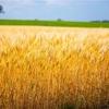 【ベストな摂取量】全粒穀物でどこまで健康になれるのか?というメタ分析のお話です