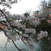 第88回高田城百万人観桜会2013(4/15)[高田公園]