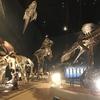 恐竜大好きな男の子におすすめ!神奈川県立生命の星・地球博物館に行ってきました!