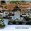 「菊が彩る江戸花屋敷」 向島百花園
