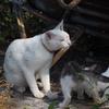 【男木島は猫島か?】本当にネコがいるか探してきたった。