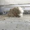 磐田市で玄関に高層マンション的な巣を作るドロバチを駆除してきました!