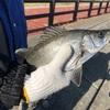 【釣り】愛知県 田原市 エコパークで(ちょい投げ、根魚)釣りリベンジ!! セイゴとカレイが釣れたよ!!!