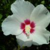 我が庭の花: 我が家の花仲間たち。