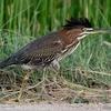 ベリーズ 道路側溝の鳥と魚