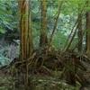 田立の滝  植物編