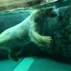 北海道旅行1日目☆旭川動物園