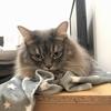 猫がNウォームを気に入った結果、寒い部屋で寝る矛盾