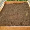アスパラ栽培への挑戦-苗の植え付け