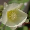 「プレイス・イン・ザ・ハート」と「最後の綿の花」