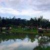 【タイ観光】カオヤイ国立公園での悲劇と喜劇