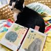 「通い猫アルフィーの奇跡 」