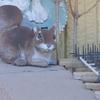 2月12日 市川市の海側からJR市川駅まで猫さま歩き とその情景