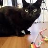 猫の身体能力は驚異的で、ロカ様も「猫」だったことを思い出しました(^^;)
