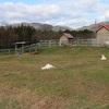 うさぎ天国・中津川ふれあい牧場でウサギにまみれてきました