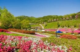 山がまるごとお花畑! 京丹後の花公園「花郷OKADA」で春の花めぐり